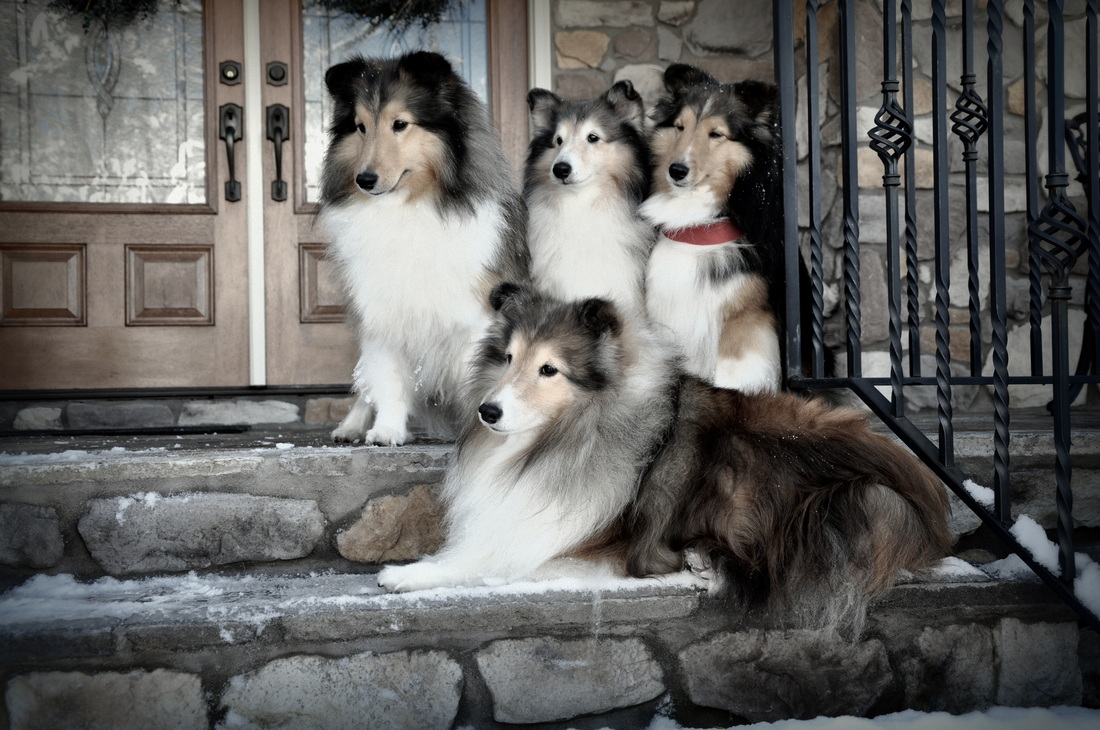 warmwindsshelties.com